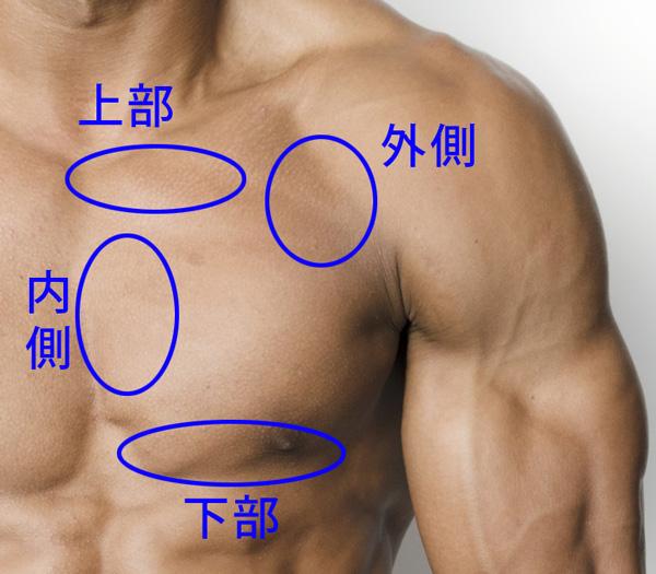 大胸筋の部位