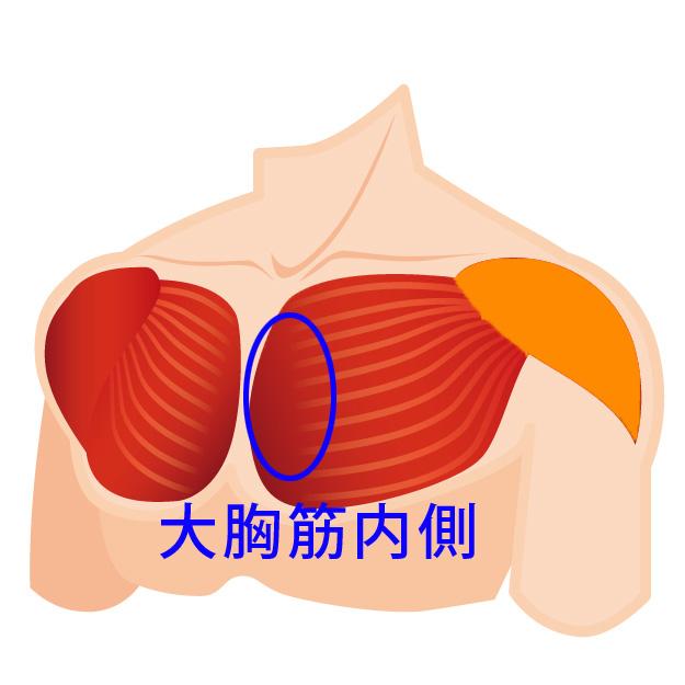 大胸筋内側